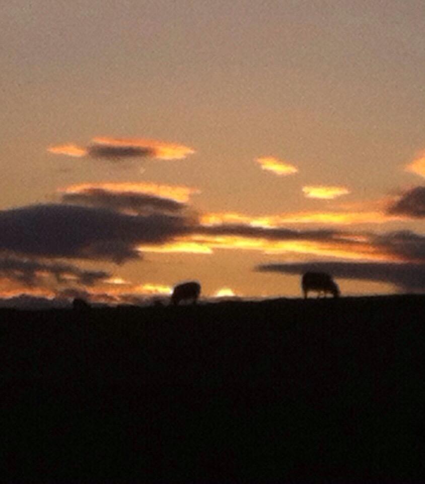 schapen alom