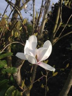 Magnolia ik hou van je, <3