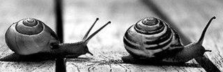 Slow Life is een aandachtig leven.