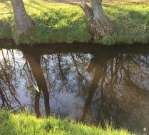 Reflectie in het stille water.