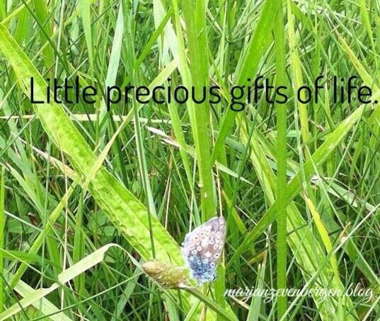 Kleine geschenkjes.
